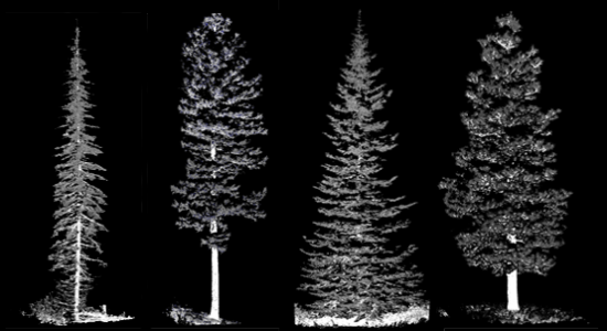 laser scanned tree image